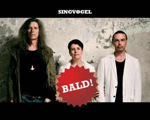"""Singvøgel: Preview zum kommenden Album """"Jetzt"""""""
